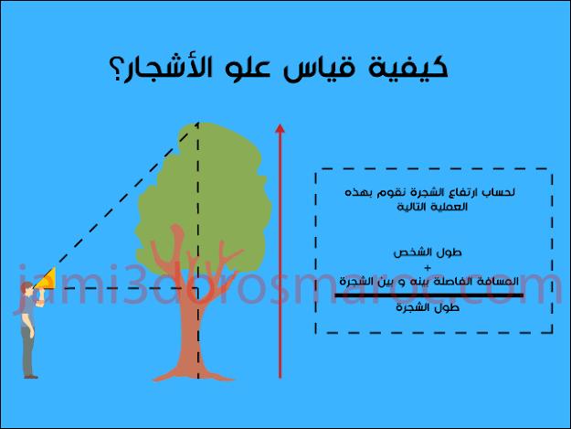 كيفية قياس علو الأشجار؟