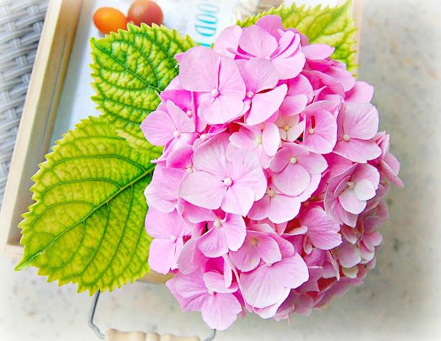 hydrangea macrophylla, french, gardening, guide, market, garden, flower, grower, homegrown, hydrangea, athomewithjemma.com