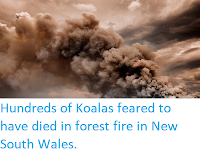 https://sciencythoughts.blogspot.com/2019/10/hundreds-of-koalas-feared-to-have-died.html