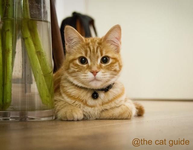 Kucing Peliharaan - rumah