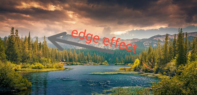 landscape, ecotone,edge effect, mountain lake