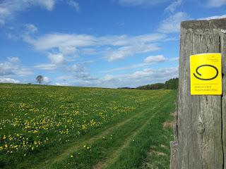 Eine Wiese, auf der gelbe Blumen wachsen. Im Vordergrund ein Holzpfahl mit dem Logo des Panoramasteigs