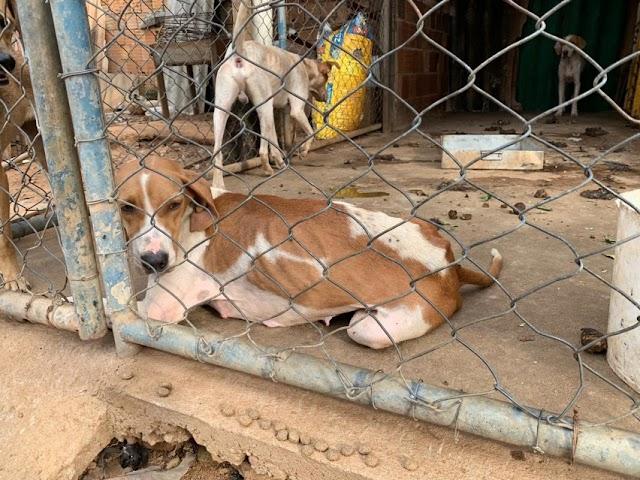 Águas Lindas: 11 cães são resgatados vítimas de maus tratos