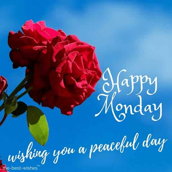 good morning wishing you a peaceful monday