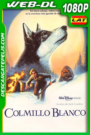 Colmillo blanco (1991) HD 1080p WEB-DL Latino – Ingles