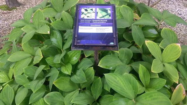 Herbs Garden, malaysia herbs, malaysia herbs garden, nursery, perak herbs, planting, speices of herbs, Taman Herba, tourism, herbs cure, planting cure, planting remedies, home remdies, natural home remedies
