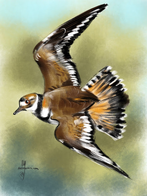 Killdeer bird painting by Artmagenta