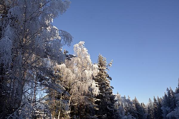 blå himmel rim frostbusker
