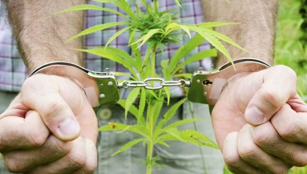 Συνελήφθησαν δύο νεαροί στη Λάρισα για κάνναβη