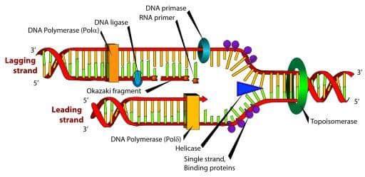 Virus Corona Vũ Hán bị tật nguyền do lỗi lập trình, ủ bệnh lâu, chữa bệnh bằng tăng sức đề khángVirus Corona Vũ Hán bị tật nguyền do lỗi lập trình, ủ bệnh lâu, chữa bệnh bằng tăng sức đề kháng