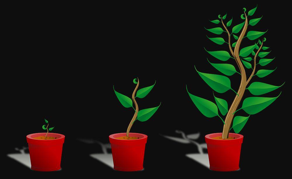 Pengertian Analisis Pertumbuhan Tanaman - Dulajar