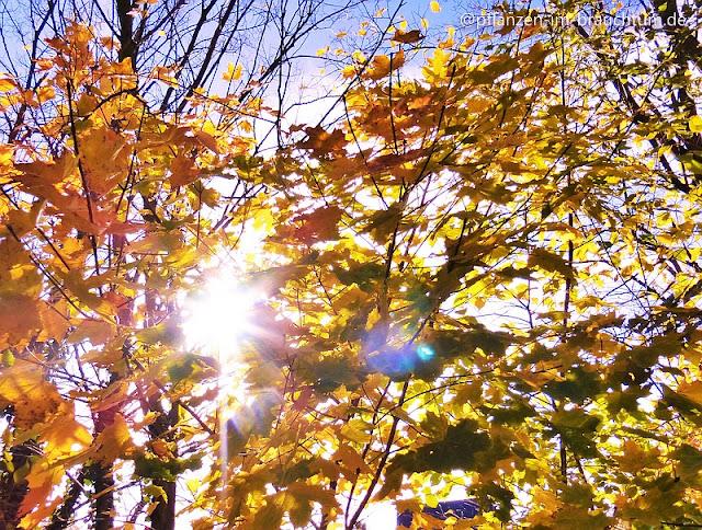 Sonniger Herbst verzaubert die Natur und macht uns fröhlich