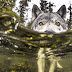 8 Incredible Pictures Of Rare Sea Wolves Who Live Off The Ocean