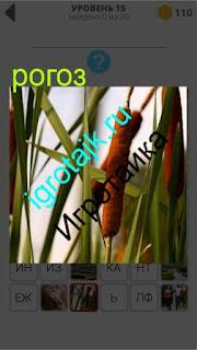 растет рогоз в камышах на болоте 15 уровень 400 плюс слов 2