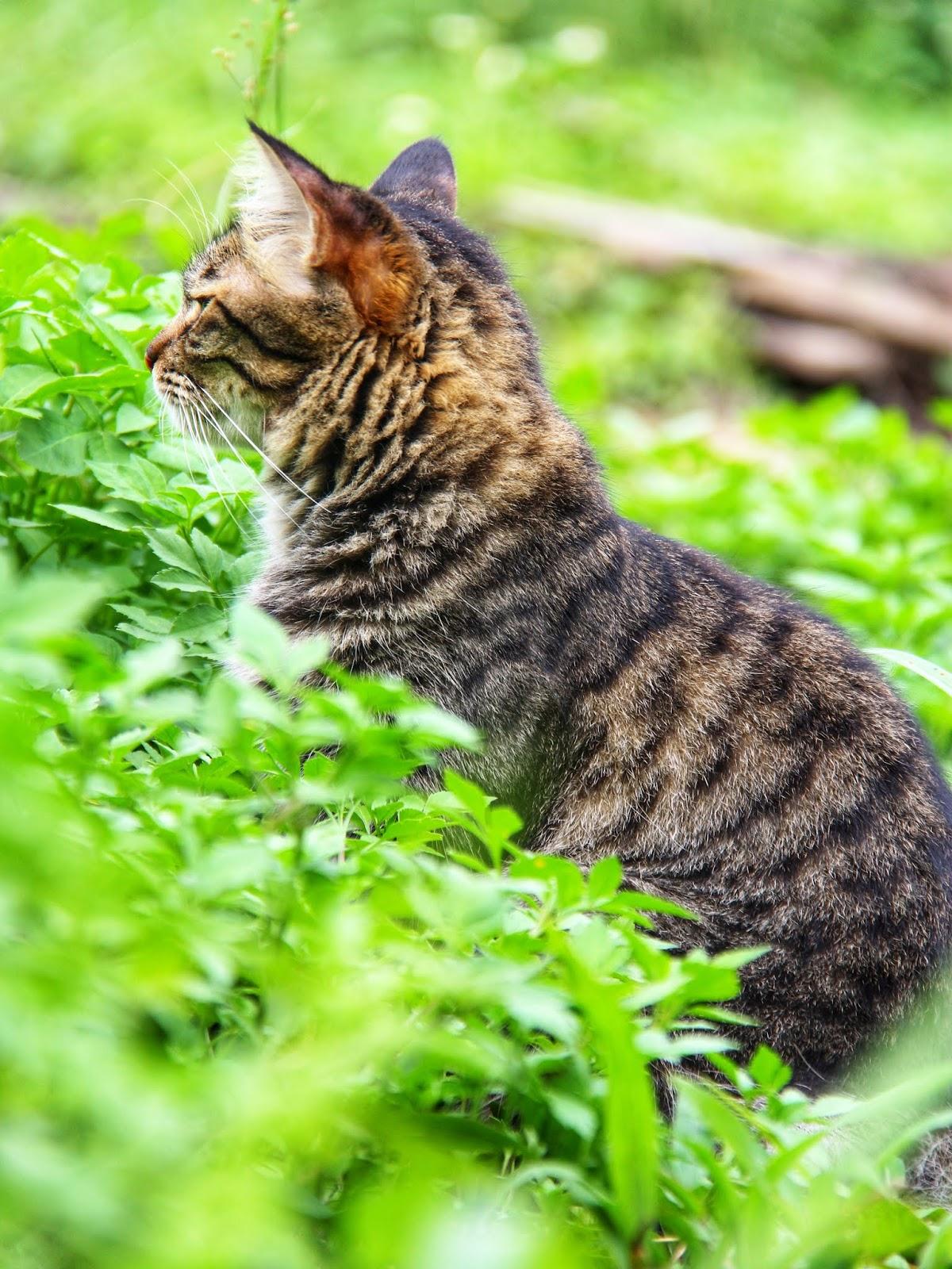 20 Koleksi Gambar Kucing Comel Bernama Tambi 5