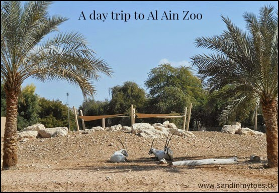 A day trip to the oldest and largest zoo in the UAE, Al Ain Zoo