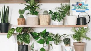 Daftar Tanaman Indoor yang Bisa Dijadikan Sebagai Mood Booster di Rumah