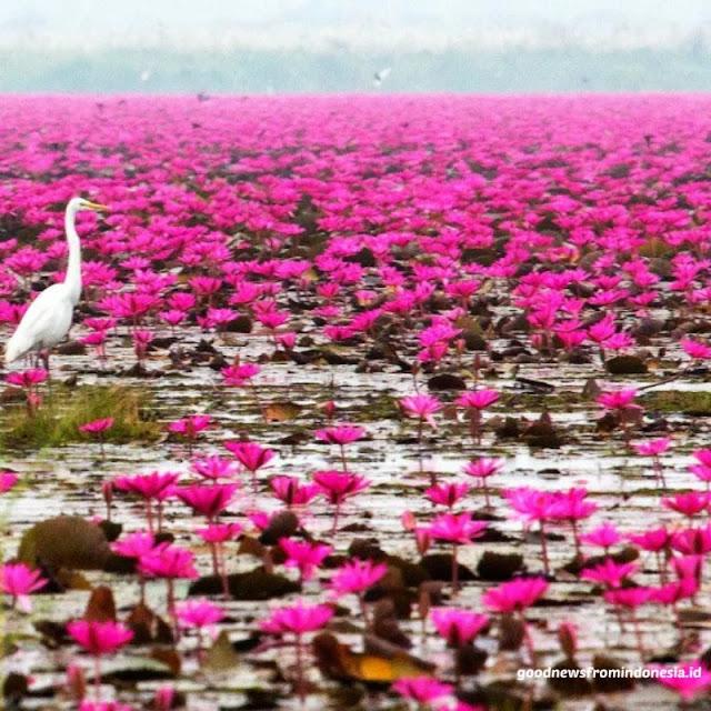 Wsiata Danau Rana Tonjong