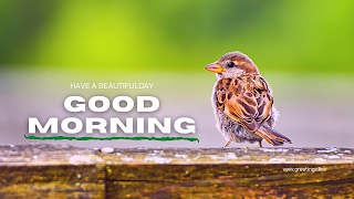 good morning wishes with sparrow bird