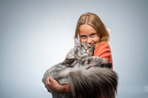 Maine Coon Cat – You Should Consider One