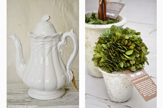 Shopping for Preserved Boxwood and Ironstone | Anderson & Grant