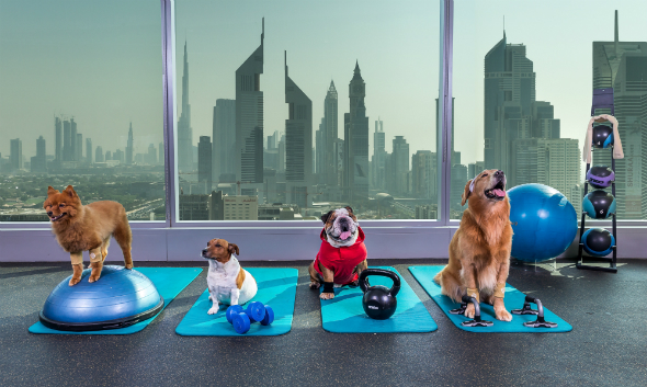 Research Laboratory in Dubai: Corona infects cats but dogs are safe