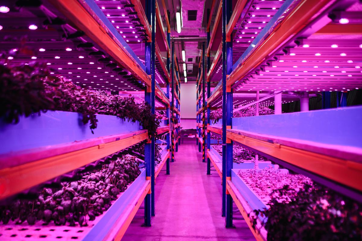 Mohammed bin Rashid launches Food Tech Valley