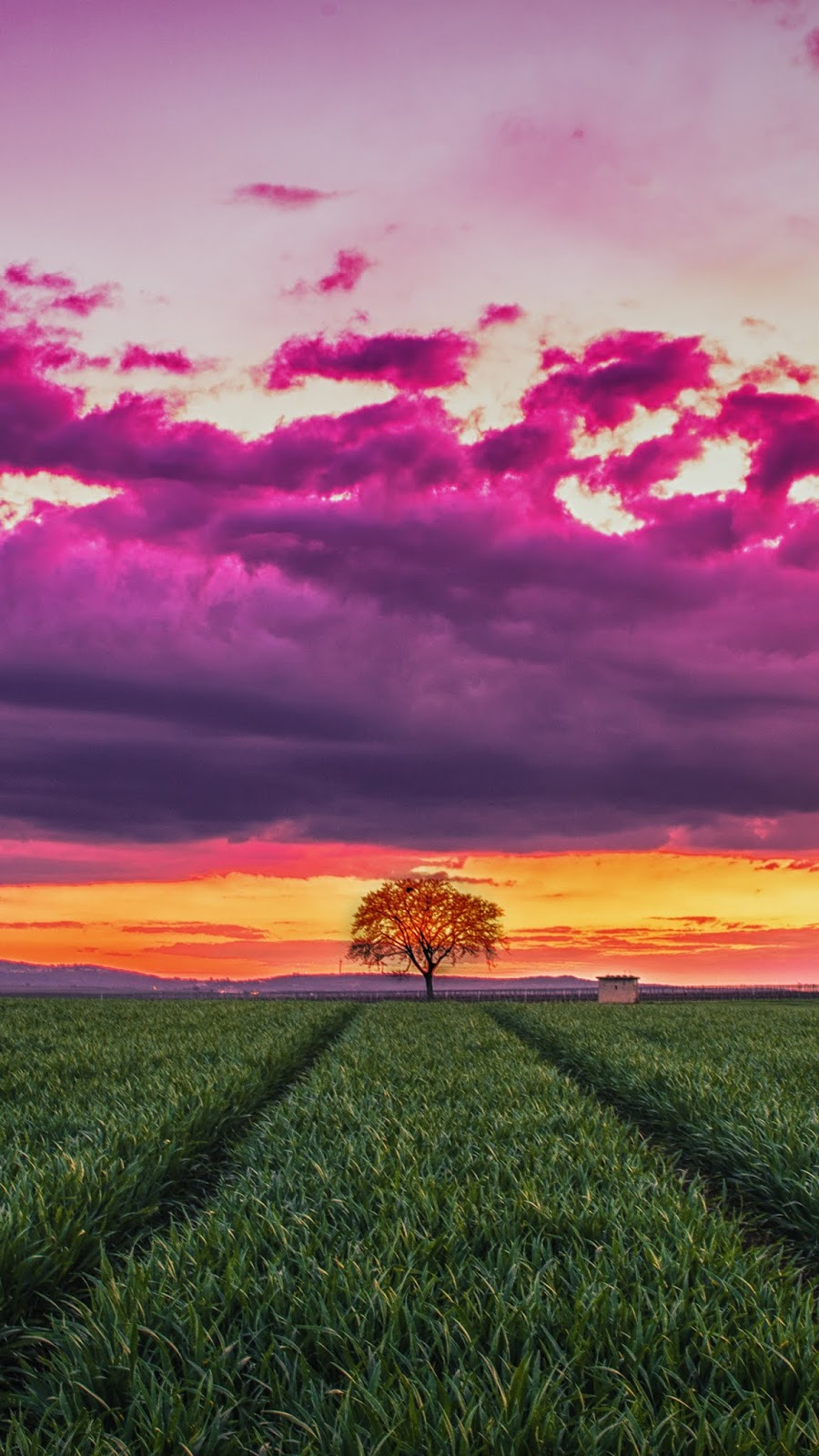 Lonely tree in the twilight sunset