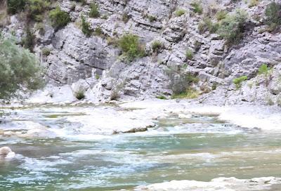 rio ara