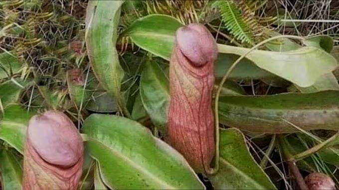 Expulsan a jardinero del Palacio de la Revolución por sembrar flores raras con forma de pene