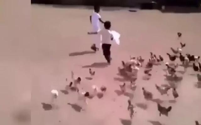 Video Lucu Anak Kecil Dikejar Ayam