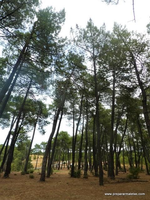 naturaleza en la Sierra Norte de Madrid