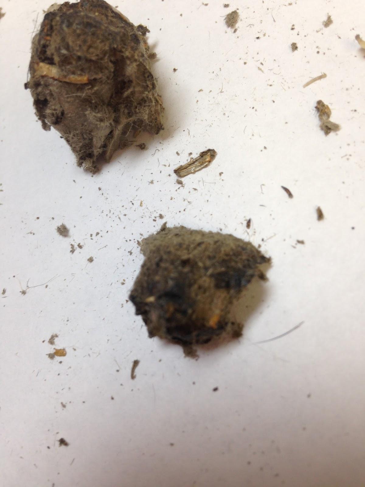 We Teach High School Forensics Owl Pellets