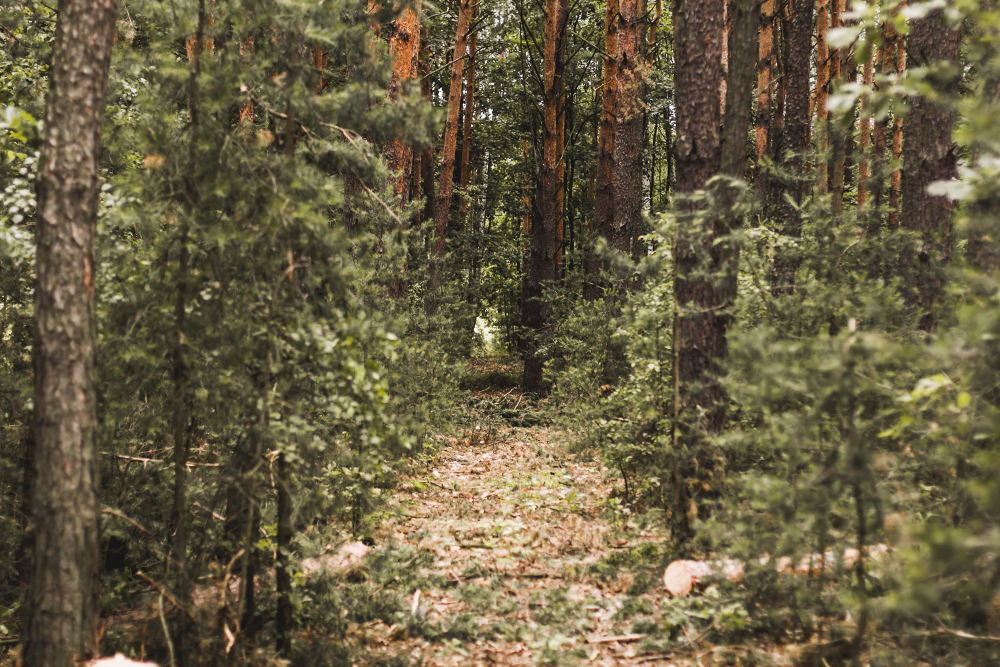las, forest
