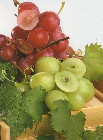 Anggur tanpa Biji