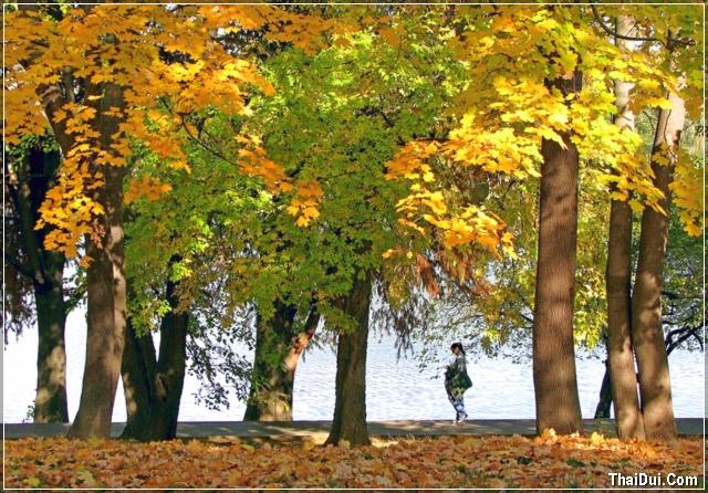dòng nước mùa thu