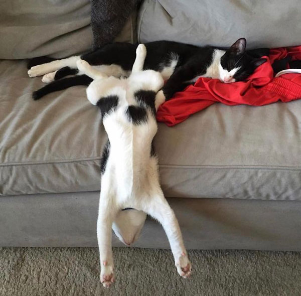 People Are Posting Pics Of Their Cats Stretching, And It's Hilarious