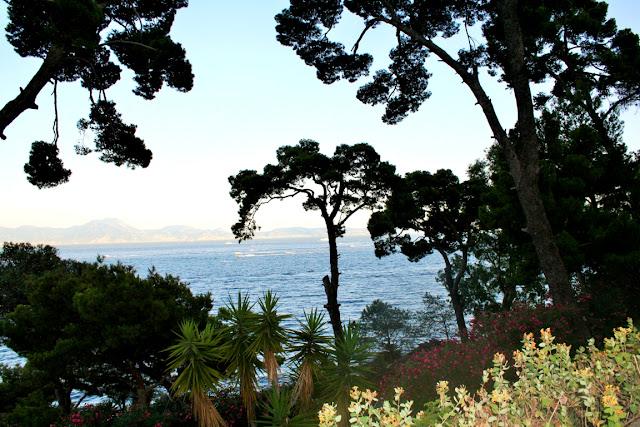 alberi, vegetazione, mare, acqua, cielo
