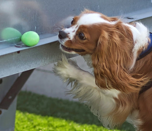 Raise a Green Dog!: Enjoy a naturally fun, healthy Easter egg hunt with your dog!