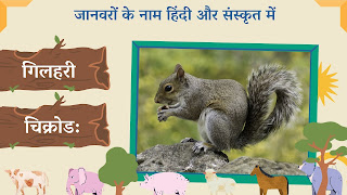 Squirrel name in sanskrit and hindi with images
