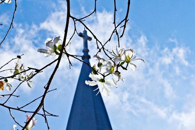 Tháng 1 hoa ban nở trắng trời Đà Lạt đẹp tựa như trong tranh 3