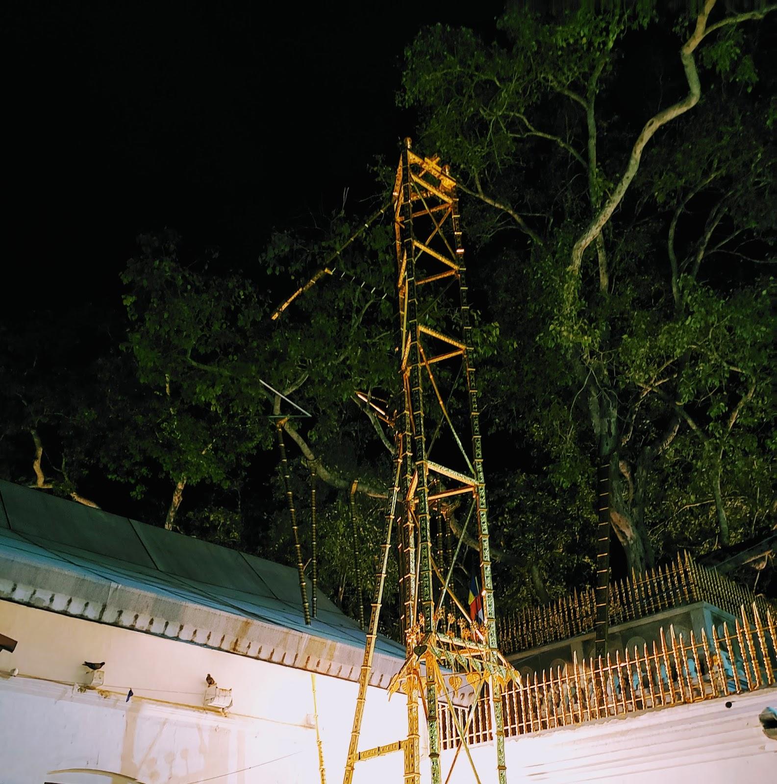 श्री महा बोधी पेड़ की पवित्र शाखा, अनुराधापुरा