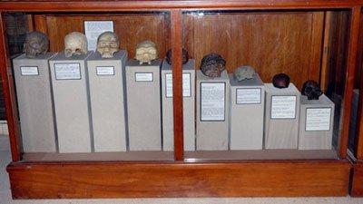 Fosil Tengkorak Purbakala