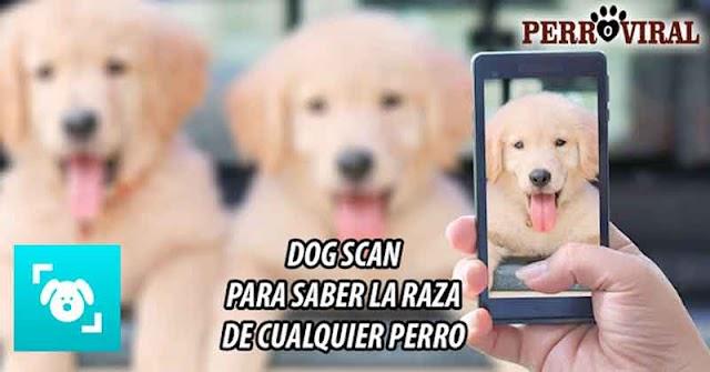 Dog Scanner - Aplicación para saber cuál es la raza de un perro