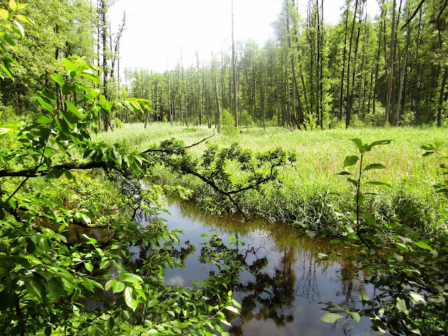 rzeka, Nadleśnictwo Parczew, Leśnictwo Jedlanka, ścieżka edukacyjna