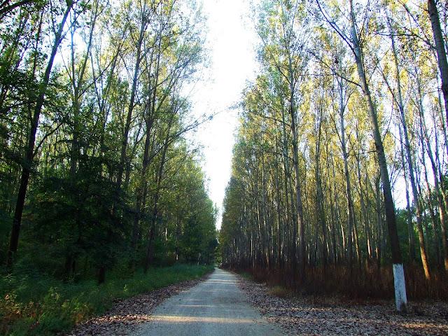 Šetnja kroz šumu je jako opuštajuća