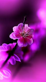 اجمل خلفيات الورود للموبايل , خلفيات صور ورد للموبايل