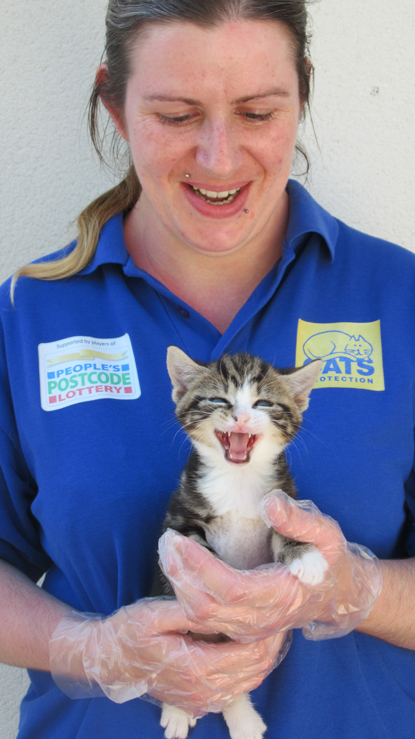 Cats Protection female employee holding tabby kitten with its mouth open