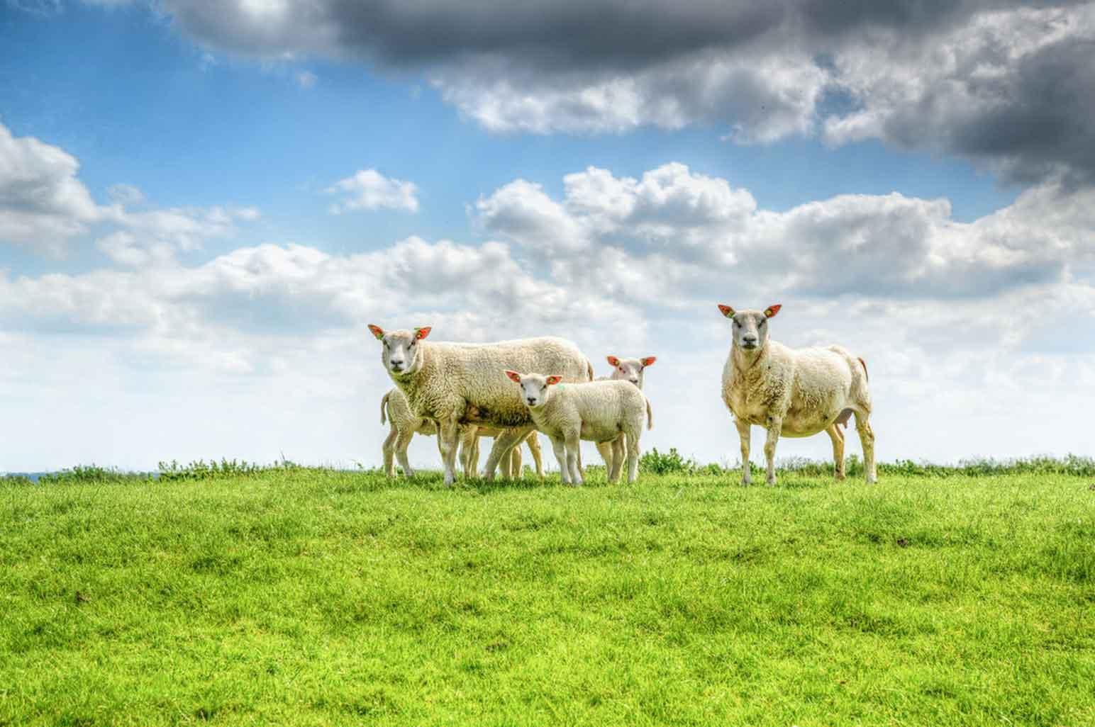 Understanding the Benefits of Organic Meat