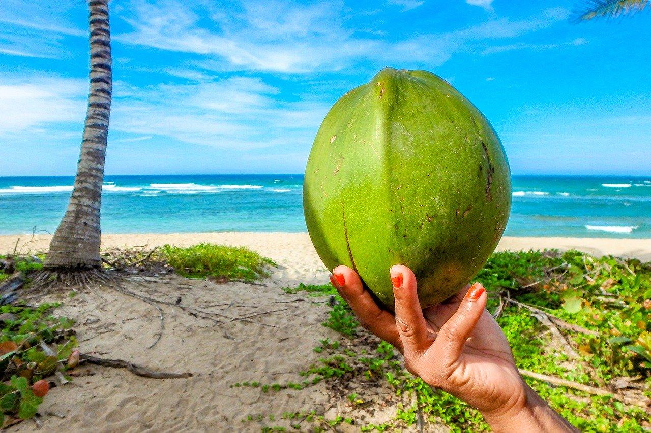 Khasiat dan Manfaat Buah Kelapa hijau Bagi Kesehatan